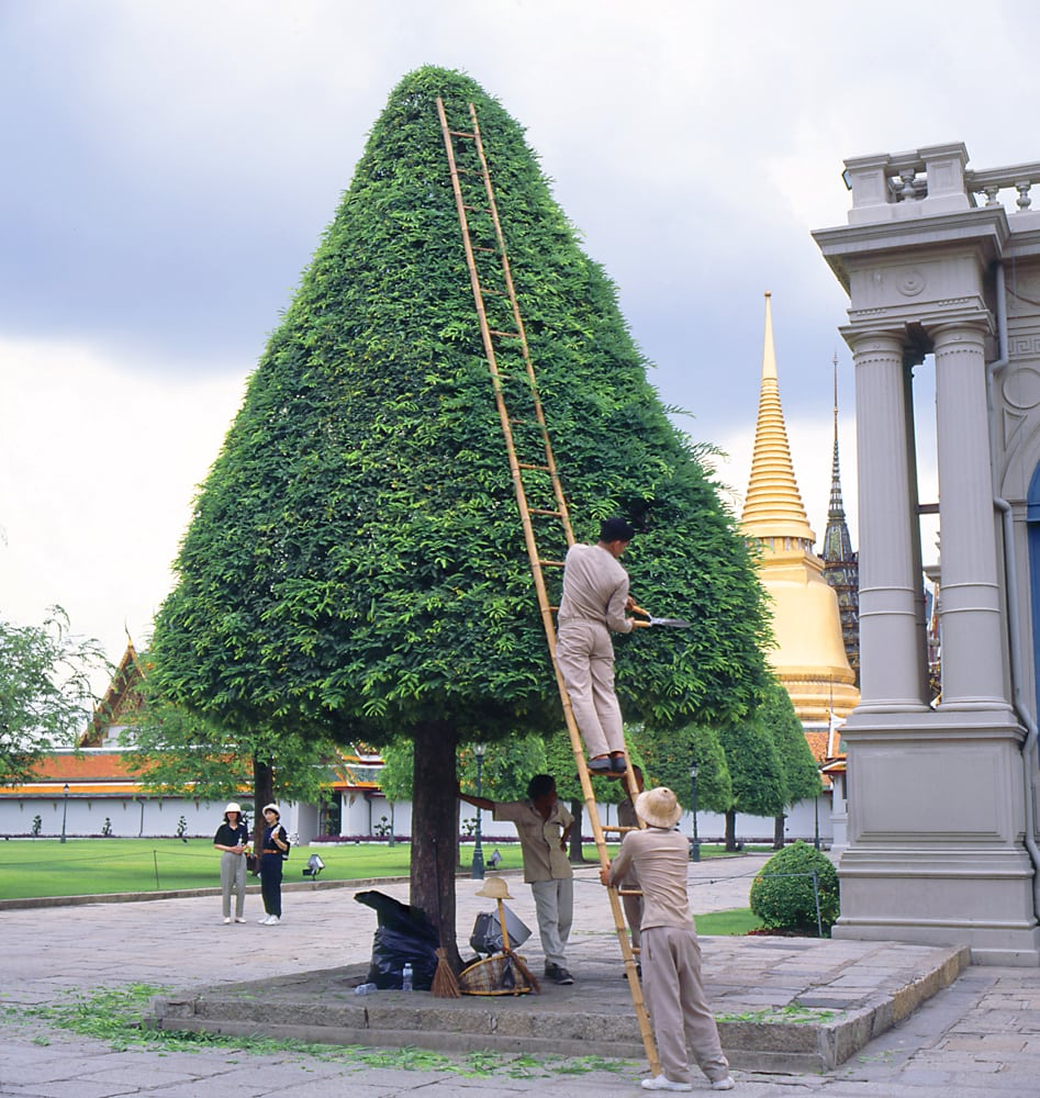 Workers on ladder trimming a pyramid shaped tree on grounds of Budist Shrine in Thailand Corporate Photography Architectural Photography