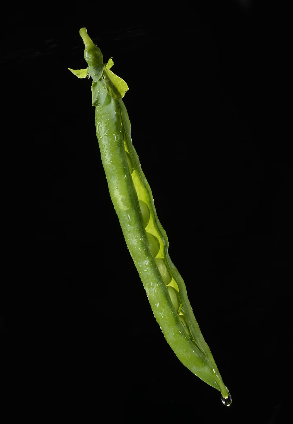 close up shot of wetted down green bean with pod split open revealing peas in side floating on black background with a water drip on the bottom end Product Photography