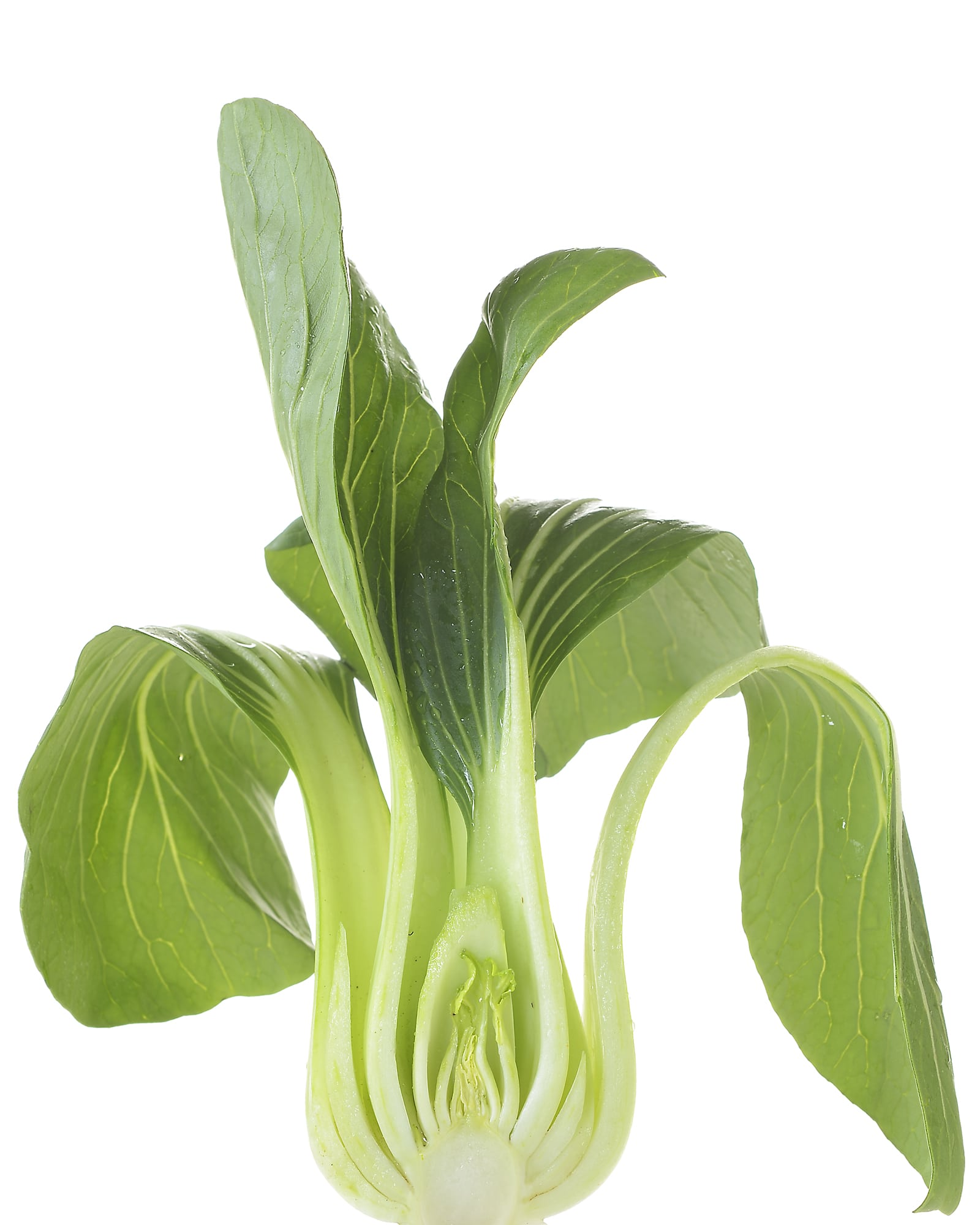 cross section of leek stalk and greens on high key white background Product Photography