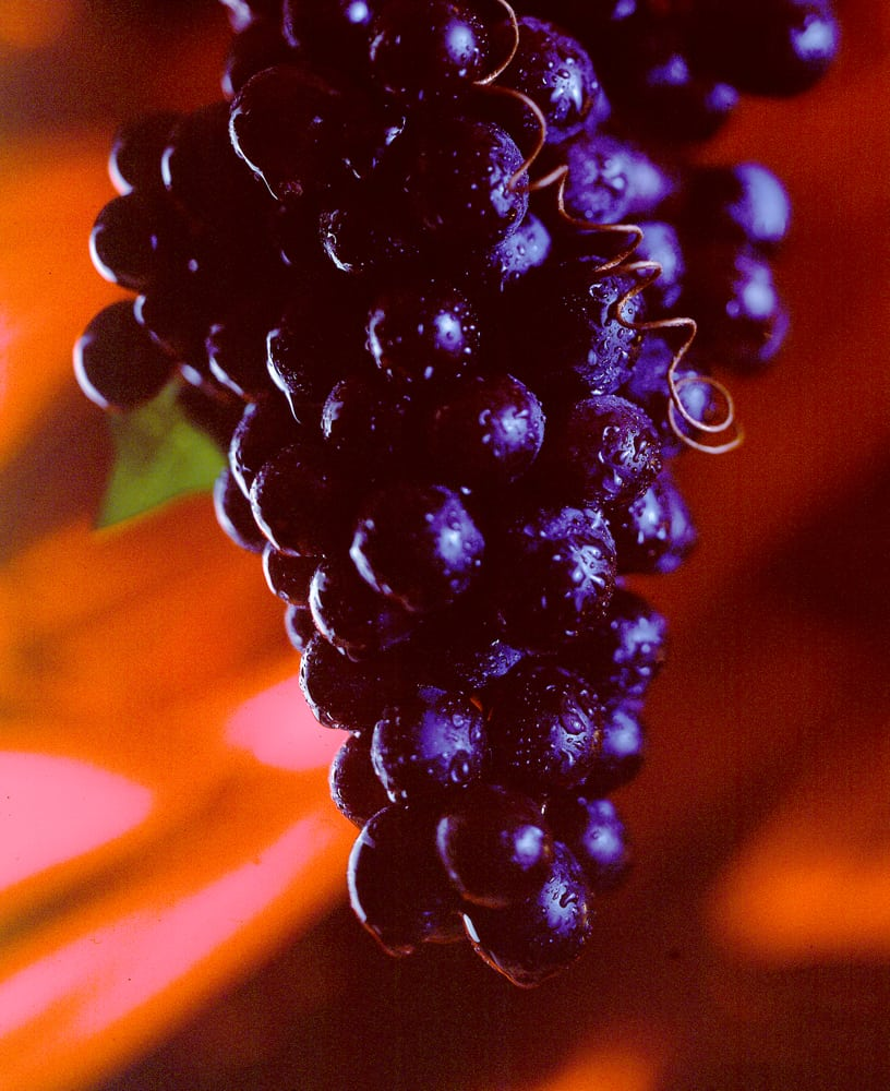 Purple grapes hanging in front of red shiny background Product Photography